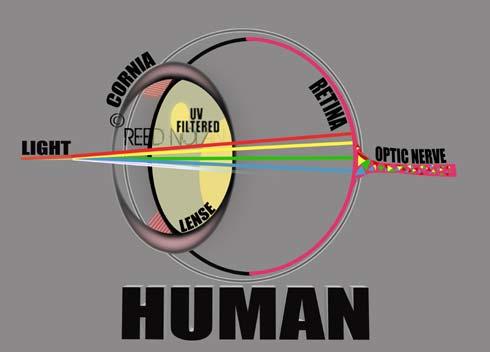 xEye diagram HUMAN