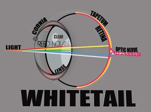 xEye diagram WHITETAIL