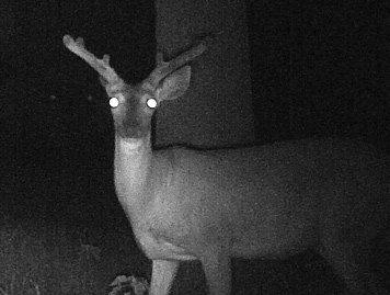 Deer Scouting: June 15-17