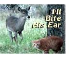 I'll Bite His Ear