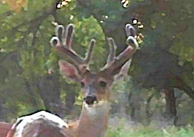 Deer Scouting Report & Pics