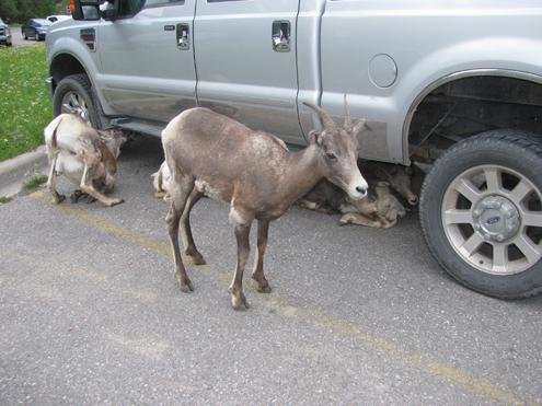 mineral-licks-for-deertures