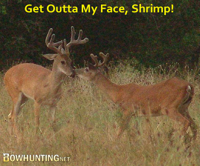 This Week On facebook.com/Bowhunting.net