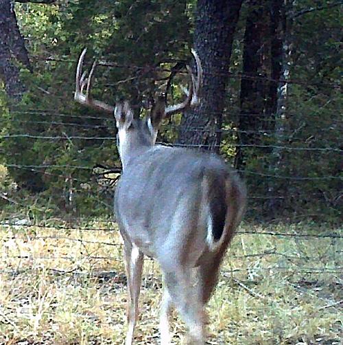 500-Point-Buck-01