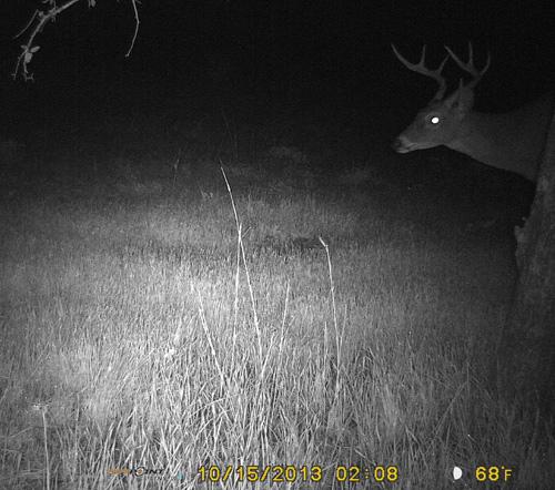 Scrape-15-Buck