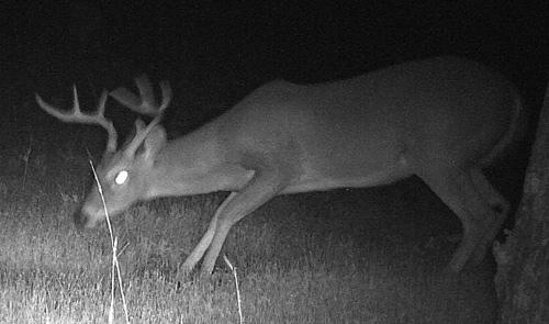 Scrape-17-Buck-CU