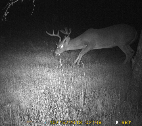 Scrape-17-Buck