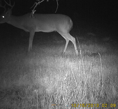 Scrape-18-Buck