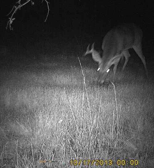 Scrape-27-Buck