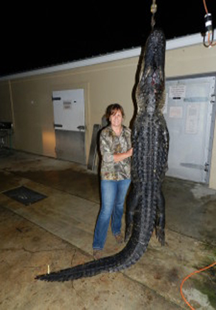 Diane's 11? alligator taken with the Tenpoint Stealth SS Crossbow. Photo: Diane Hassinger