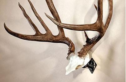 SkullHooker Introduces The New Bone Bracket for Skullcaps