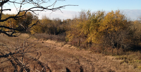 Bill's tree Stand location was in a large oak tree overlooking a volunteer food plot field with woods on three sides