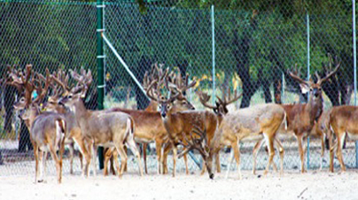 P&Y Club Supports Free Ranging NA Big Game