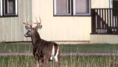 Sunday Bowhunting Bill Passes Connecticut House