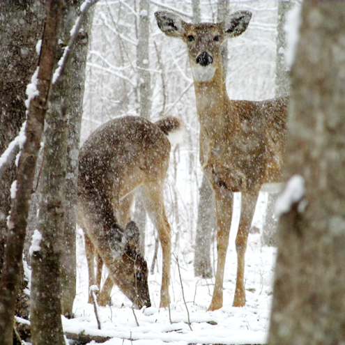 Poor hunting conditions affected some 2013 harvest numbers; however, there are other reasons some prime whitetail states are reporting declining deer populations and shot opportunities.