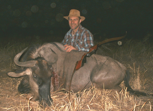 The wildebeest I bagged with my new take-down recurve.