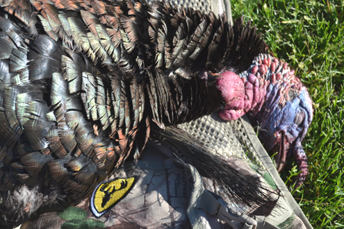 ScentBlocker ThunderChicken Vest and turkey. Just go together so nicely.