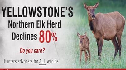 Big Game Herds Dwindle –  Wildlife Agencies Hide Wolf Numbers