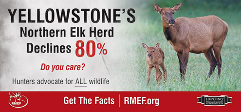 Rocky Mountain Elk Foundation billboard now seen along Northern Rockies interstate highways reveal that not all is well in Yellowstone National Park...despite the claims of pro-wolf groups.