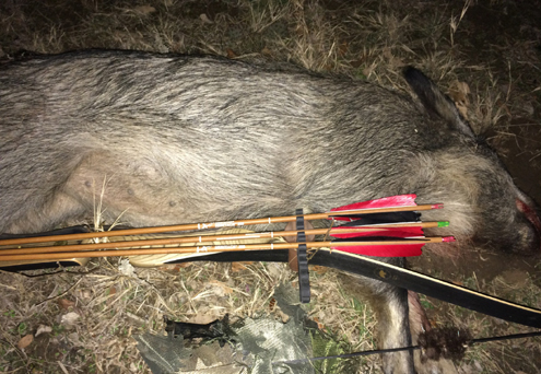 One of the authors Super Kodiak downed hogs.