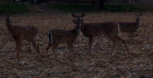 Deer-Eyes