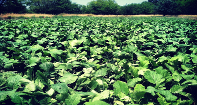 ScentBlocker's Guide to Planting Spring Food Plots