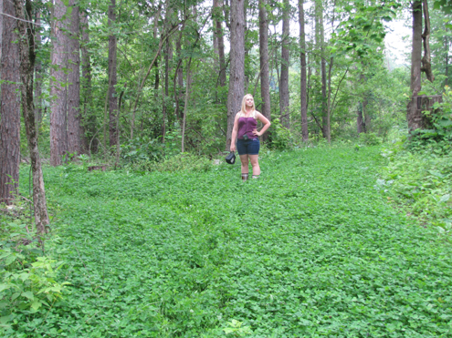 This stand of clover mix is what we dream of.