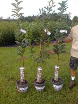 10Realtree-chestnuts-and-sa