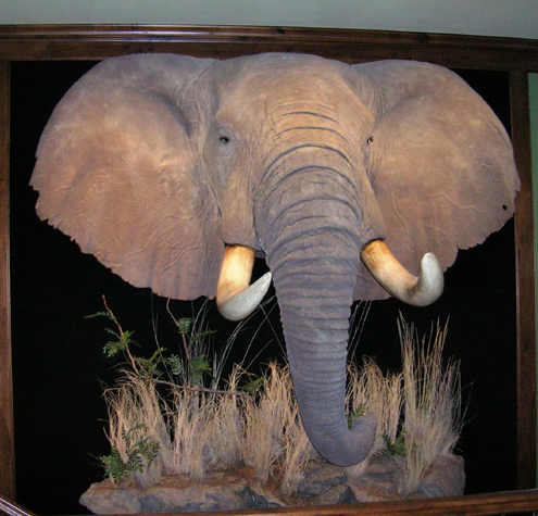 The safari hunter that took this great elephant, put thousands of dollars into the local and country economy.
