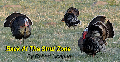 404x209-Back-At-Strut-Zone-