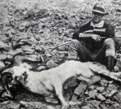 Pioneer bowhunter Art Young took this Dall's sheep in the early 1920s. He also tagged a variety of Alaskan big game including Kodiak bears, moose, caribou, and mountain goats. A b/w film of his hunting exploits influenced Fred Bear, among others, to try bowhunting for himself.