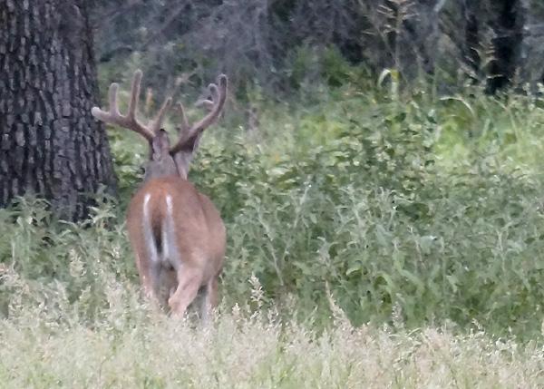 July-17-Buck-1-729