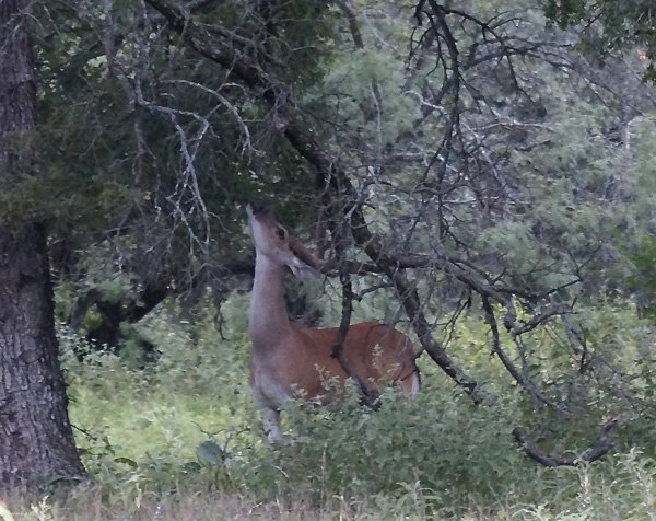 July-17-Buck-2-768