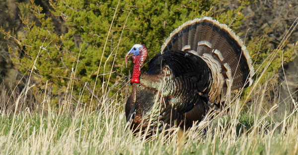Report: Bowhunting South Dakota