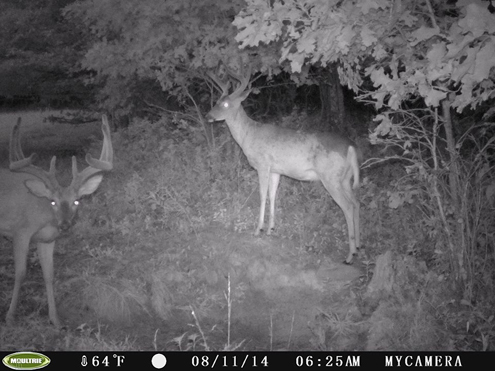 Do it yourself bowhunts 2016 southern ohio outfitters all weeks listed are considered peaks weeks by southern ohio outfitters and have approximately the same opportunity rate therefore all the same price solutioingenieria Choice Image