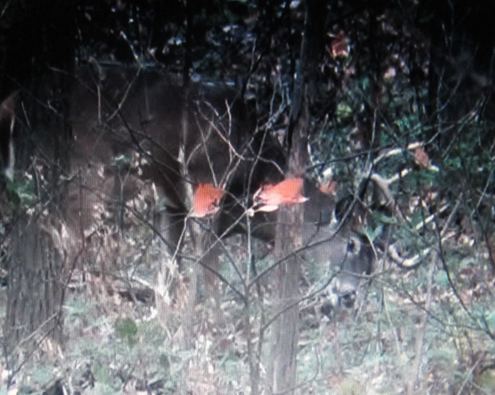 The annual rut is when even the wiliest old bucks like these Illinois whoppers may finally show themselves. It's my favorite time of year and all-day vigils can pay off with a glimpses of big antlers.ended my quest for a book buck.