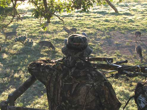 Even if you look at deer all day long and know them by name it is still difficult to AOTH and get it right.