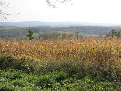 When the corn turns golden the mast, on the woods edge, is peaking.