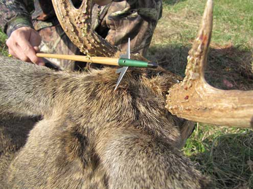 The antler broadhead connection most hunters are seeking.