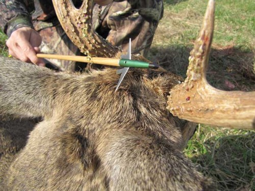 Author has shot a lot of broadheads, his choice - The Swhacker.