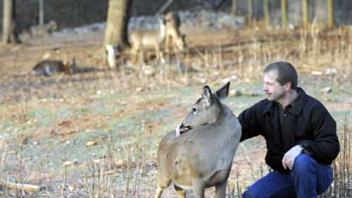 Dr. Miller with one of his research deer at the Warnell School of forestry in Athens Georgia.