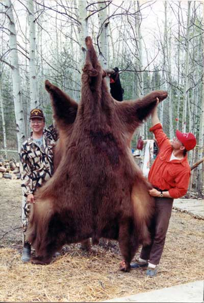 """Another Alberta chocolate that scored 20 1/4"""" and consumed part of another bear before he died."""