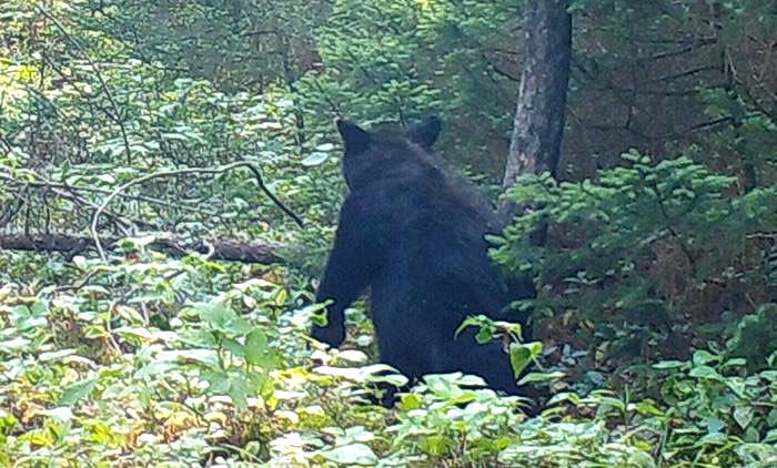 The Last Bear Hunt