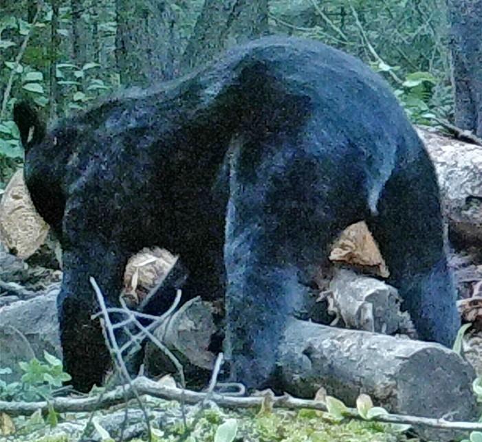 The Last Bearhunt: Finding Bears