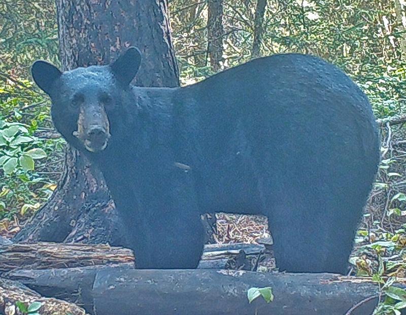 The Last Bear Hunt: Finding More Bears