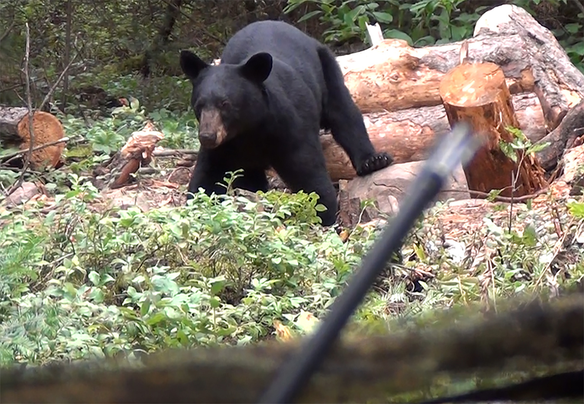 H1-Fred-bear-logs-CU