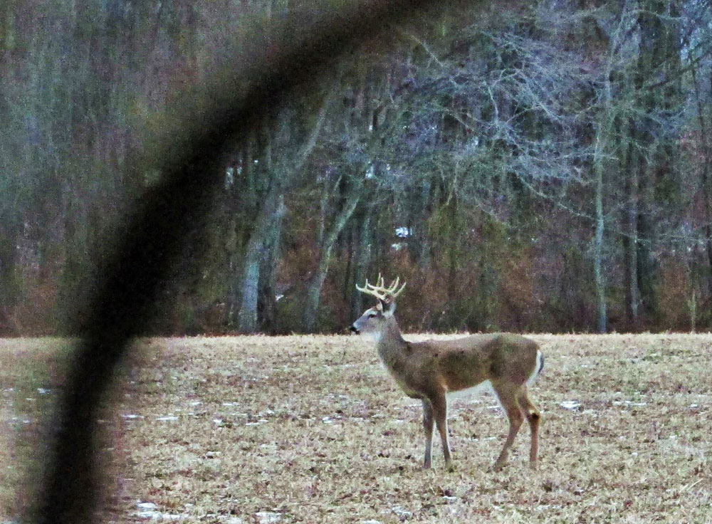 Portable blinds, strategically located near feeding areas, can pay off with close shots at deer and other game.