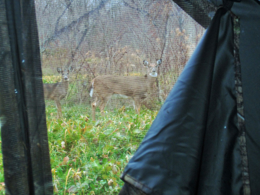 Shooting through window mesh takes practice but works well with most broadheads. The bonus is wary game can't see a hunter drawing his bow.