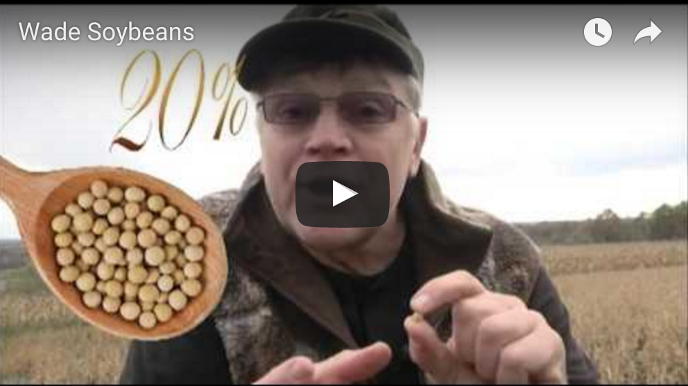 Whitetails Favorite Crops…And Why?