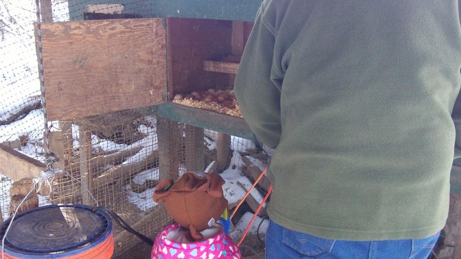 We swing open the nest box door and spot the golden eggs.